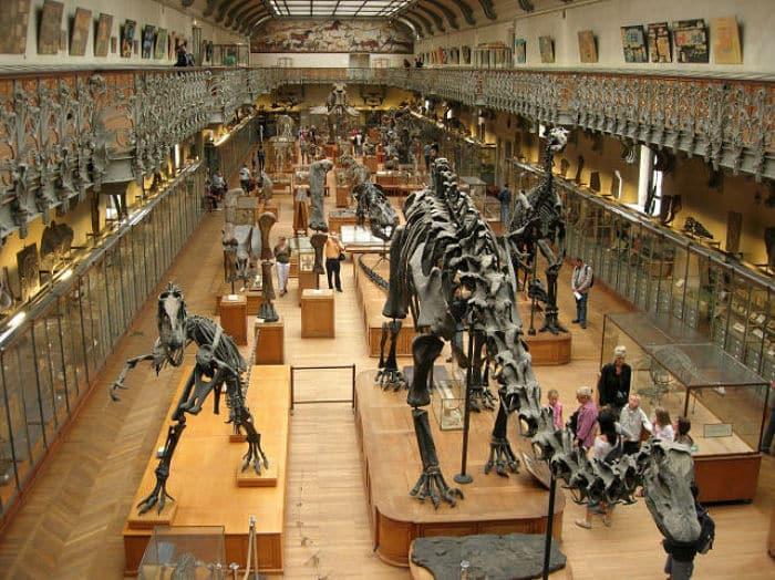 Ardió Paris - Página 14 Museo-de-Historia-Natural-de-Londres-6_opt