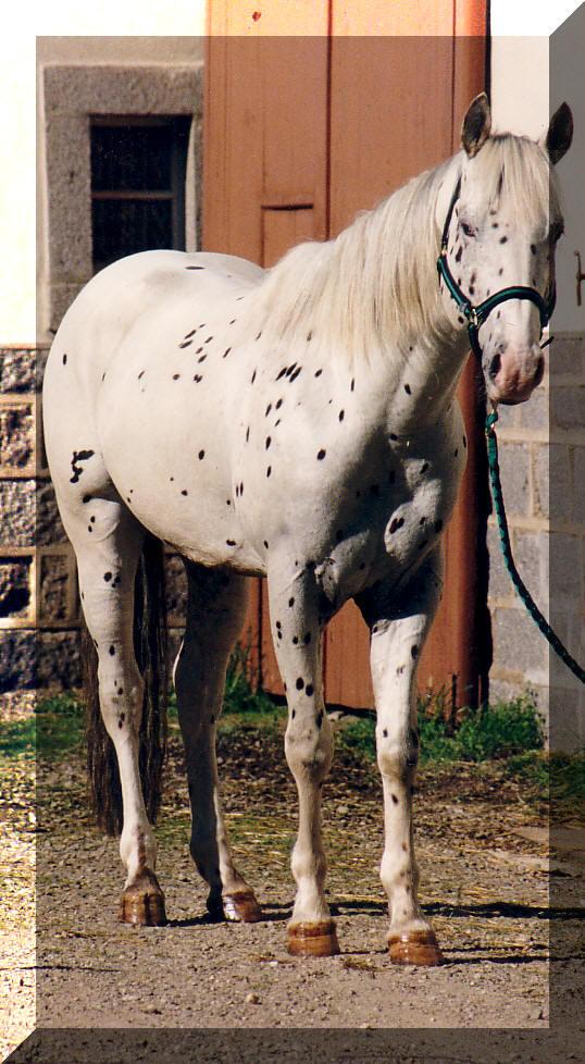 Les vacances chez Talisman Horses - Page 4 Prince%20gr