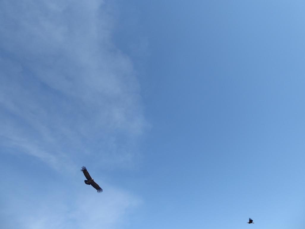 Oiseaux IMG_8707
