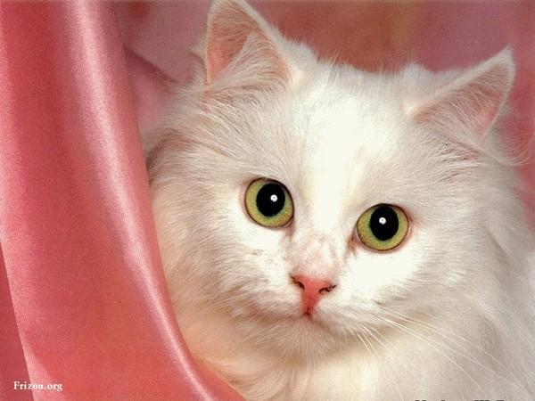 les chats!! 185eb138