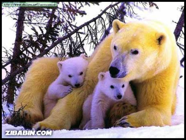 Les ours - Page 3 272bb463