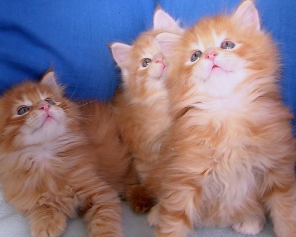 les chats!! 34c70ca1