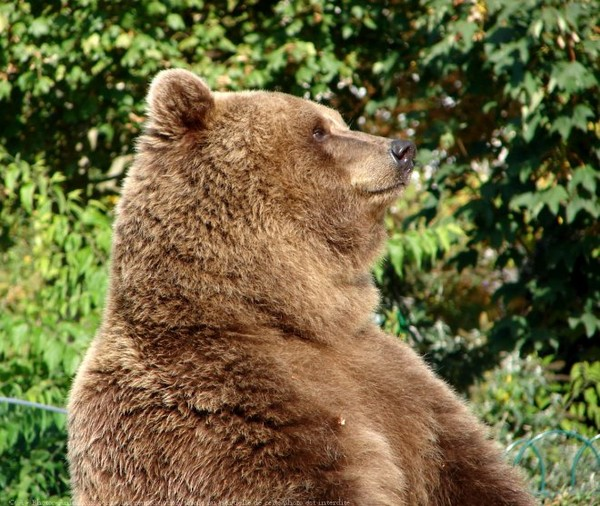 Les ours - Page 3 447042ae