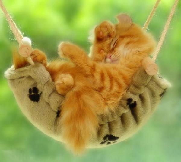 les chats!! 73414299