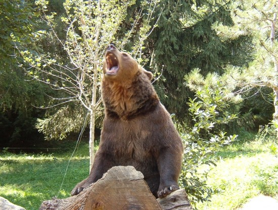Les ours - Page 3 7b2523a1