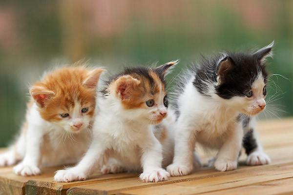 les chats!! Eab5a642