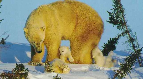 Les ours - Page 3 F8592487
