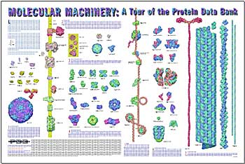 Proteins: how they provide striking evidence of design Goodsell-poster