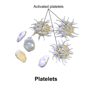 Hematopoiesis. The mystery of blood Cell and vascular Formation BruceBlaus-WIK-diagram-activated-platelets-600px-Blausen_0740_Platelets-300x300
