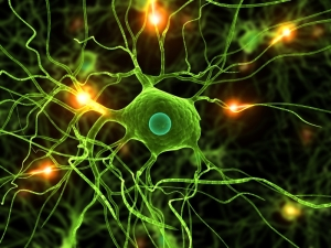 The Remarkable Language of Cells FEATURE-Microglia-iStock_000006935562Small-300x225
