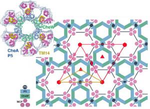The Remarkable Language of Cells Hexagonal-Receptors--300x219