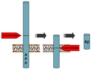 The astonishing  language written on microtubules, amazing evidence of  design PD-APP_processing-300x224
