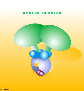The astonishing  language written on microtubules, amazing evidence of  design PD-Dynein_coplex-279x300