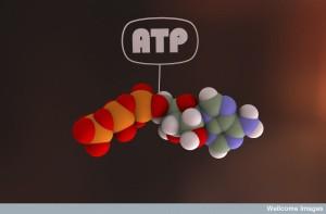 The astonishing  language written on microtubules, amazing evidence of  design WC-ATP--300x197