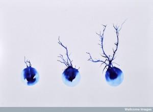 The astonishing  language written on microtubules, amazing evidence of  design WC-axon-neuron--300x220