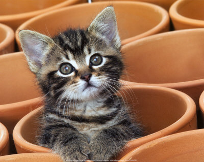 Longest Thread Ever! Jean-michel-labat-kitty-cat