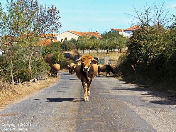 Estrada do Candedo / Penedo Durao I-bxh8vmq-M