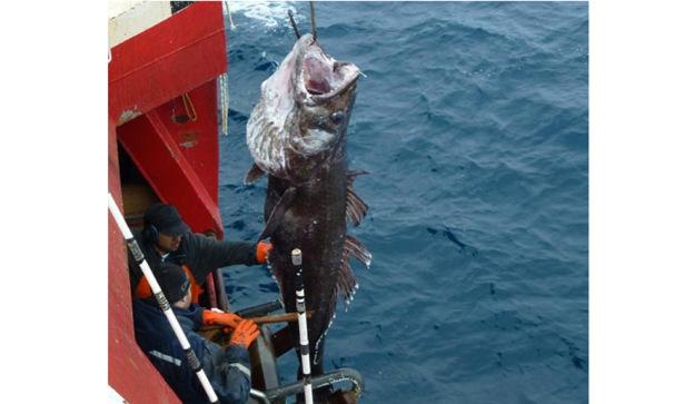 A un paso de la protección del Océano Austral 6ED