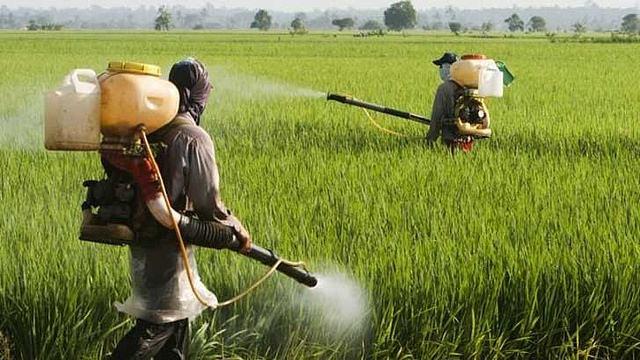 En la India utilizan Coca Cola y Pepsi como pesticidas B50