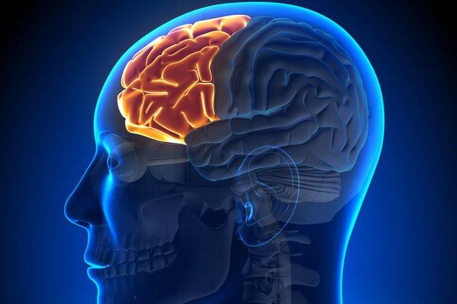 بحث علمي رائع حول تلف الدماغ بمشاهدة الأفلام الإباحية  5(22)