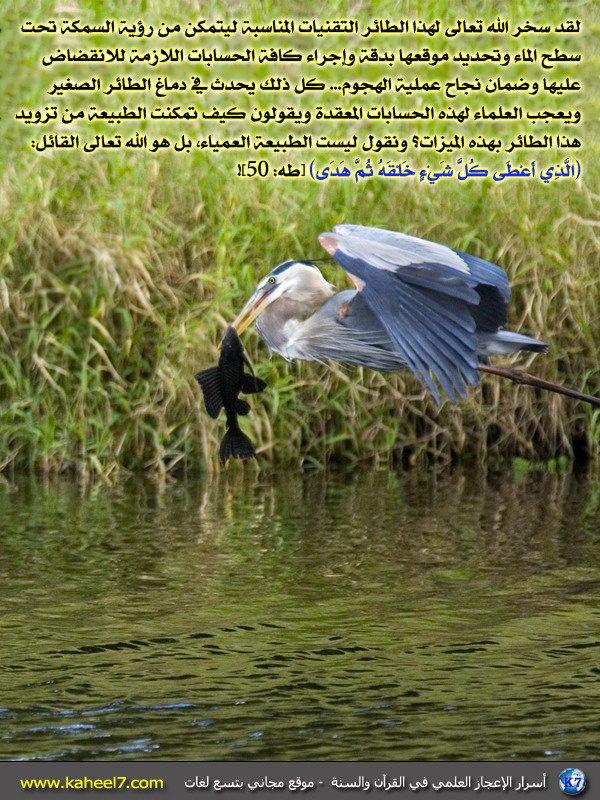 رائع بالصور: من أسرار الإعجاز العلمي في القرآن والسنة 72727