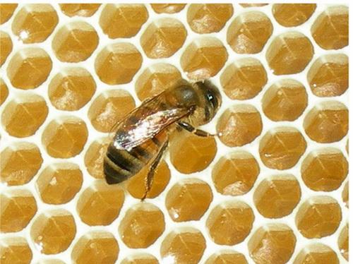 العسل أفضل غذاء للأطفال والشباب والكبار،  78678687