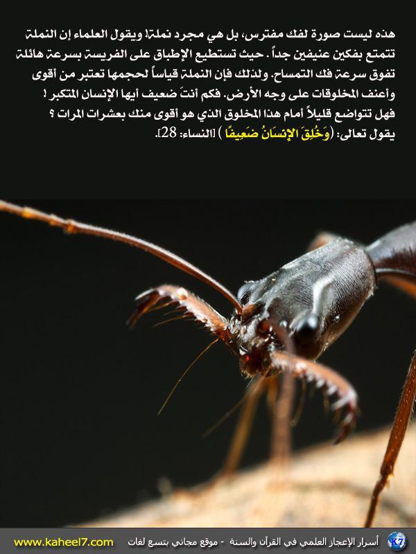 رائع بالصور: من أسرار الإعجاز العلمي في القرآن والسنة Ant-strong