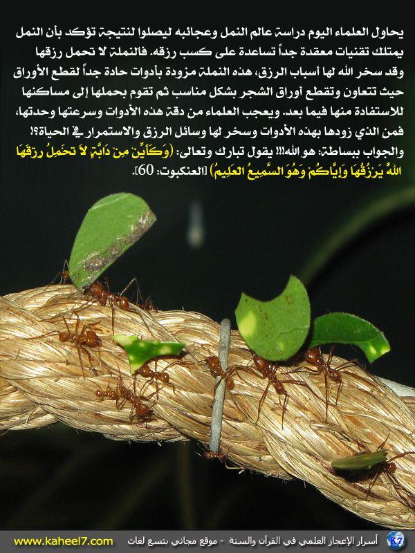 رائع بالصور: من أسرار الإعجاز العلمي في القرآن والسنة Ants-eat