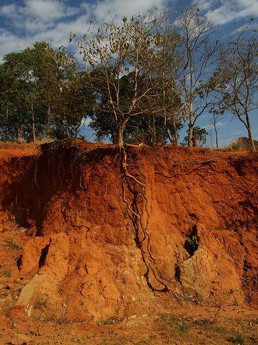 لعاب الإنسان وتربة الأرض مصدران مهمان للشفاء  John_duffel1l