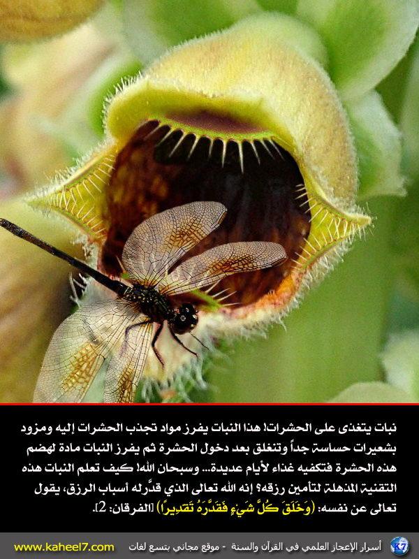 رائع بالصور: من أسرار الإعجاز العلمي في القرآن والسنة Plants-eat-sick
