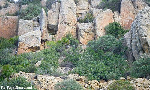 Cap Bon : Un piton rocheux appelé Bec de l'Aigle Montagne-de-Korbous