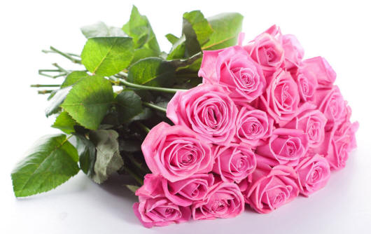 цветы фото и картинки