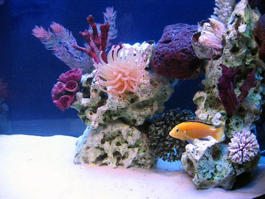 кораллы Korally_rif_kartinki_foto_07