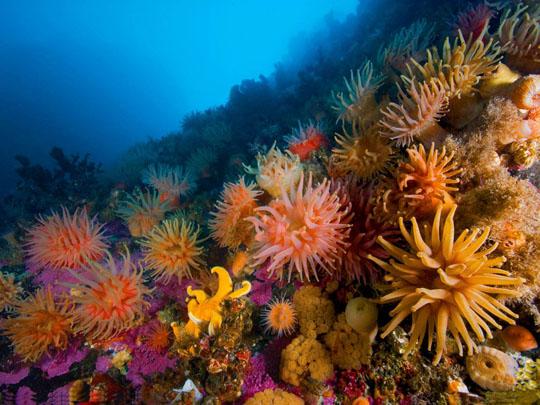 кораллы Korally_rif_kartinki_foto_09