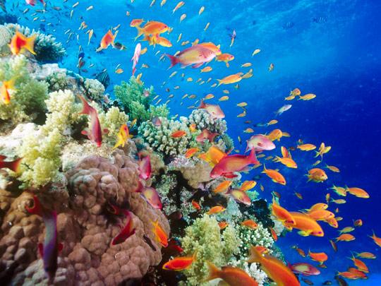 кораллы Korally_rif_kartinki_foto_16_glavnaja