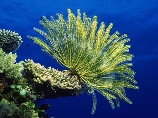 кораллы Korally_rif_kartinki_foto_27