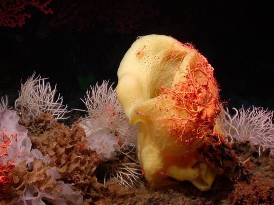 кораллы Korally_rif_kartinki_foto_35