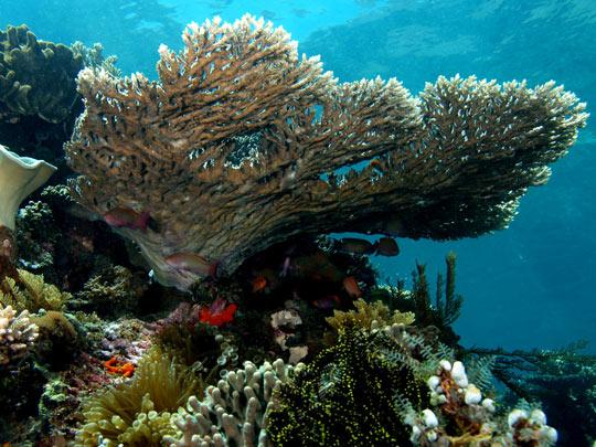 кораллы Korally_rif_kartinki_foto_37