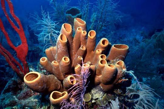 кораллы Korally_rif_kartinki_foto_40