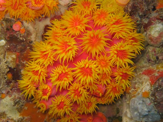 кораллы Korally_rif_kartinki_foto_42