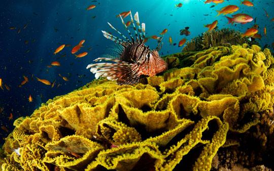 кораллы Korally_rif_kartinki_foto_47