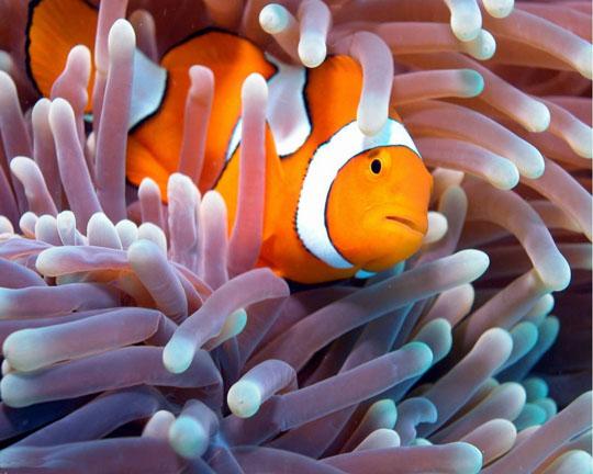 кораллы Korally_rif_kartinki_foto_52