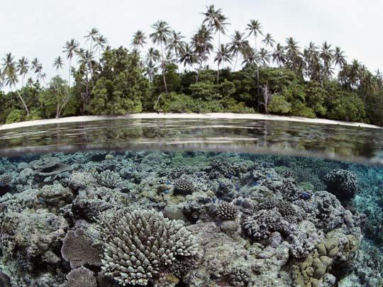 кораллы Korally_rif_kartinki_foto_54