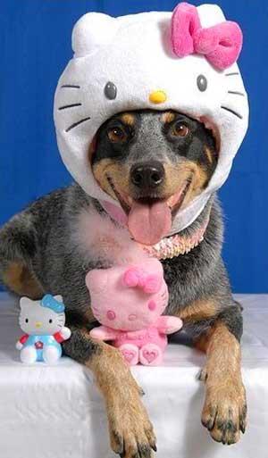 kitty spullen Hello-kitty-hat