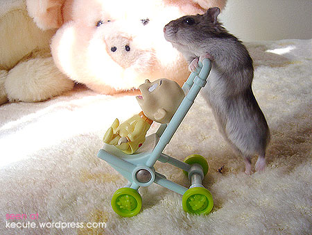 Hrčci - hrčak Hamster-mom