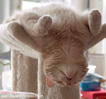 فوائد البقدونس Sleep