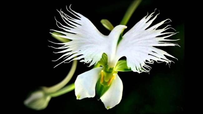 14 loài hoa có hình dạng kỳ lạ nhất thế giới 1132555-maxresdefault-650-90cb61bbb1-1484647157-1489911425447