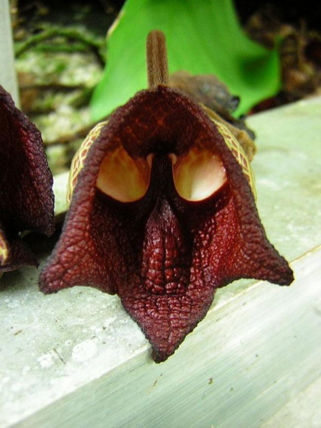 14 loài hoa có hình dạng kỳ lạ nhất thế giới 1133155-c46175bfe26abcb97583ff72da8320f6-650-102a663ed2-1484647157-1489911425459
