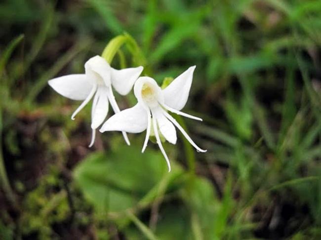 14 loài hoa có hình dạng kỳ lạ nhất thế giới 1133305-2147-26-650-4d324bc705-1484647157-1489911425470