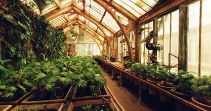les cours de botanique. Visite_serres